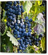 Wine Grapes Canvas Print by Tetyana Kokhanets