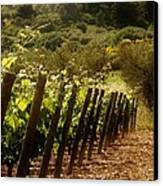 Wine Growing Pouring And Enjoying  Canvas Print by Christine Burdine