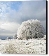 Winter Canvas Print by Anne Gilbert