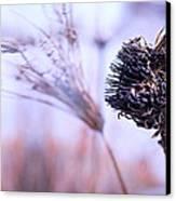 Winter Flowers  Canvas Print by Bob Orsillo