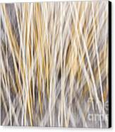 Winter Grass Abstract Canvas Print by Elena Elisseeva