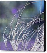 Winter Grass Canvas Print by Artist and Photographer Laura Wrede
