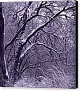 Winter In Purple Canvas Print by Carol Groenen