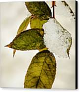 Winter Leaves And Snow Canvas Print by Julie Palencia