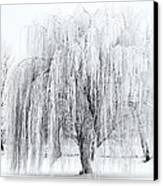 Winter Willow Canvas Print by Mike  Dawson