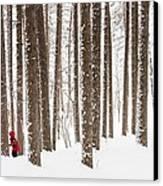 Winter Frolic Canvas Print by Mary Amerman
