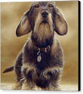 Wire Haired Dachshund Canvas Print by John Silver