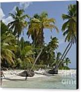 Woman Walking By Coconuts Trees On A Pristine Beach Canvas Print by Sami Sarkis