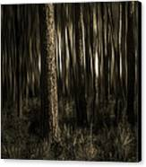 Woods Canvas Print by Mario Celzner
