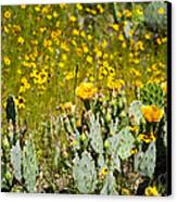 Yellow Blooms Canvas Print by Mark Weaver