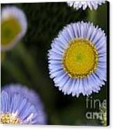 Yellow In The Middle Canvas Print by Artist and Photographer Laura Wrede