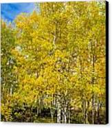 Yellows Of Fall Canvas Print by Baywest Imaging