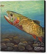 Yellowstone Cut Takes A Salmon Fly Canvas Print by Rob Corsetti