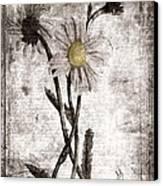 Yesterday's Garden II Canvas Print by Bonnie Bruno