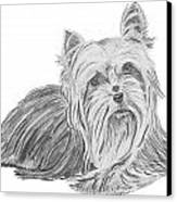 Yorkshire Terrier Drawing Canvas Print by Catherine Roberts