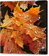 You Waited For Me To Fall Canvas Print by Catherine Reusch  Daley