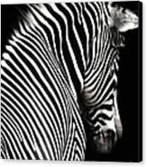 Zebra On Black Canvas Print by Elle Arden Walby