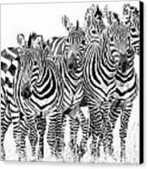 Zebra Quintet Canvas Print by Mike Gaudaur