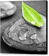 Zen Stones Canvas Print by Elena Elisseeva