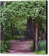 Zilker Botanical Tree Arbor Canvas Print by Kristina Deane