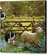 Collecting The Strays Canvas Print by Trudi Simmonds
