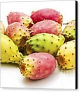 Fruits Of Opuntia Ficus-indica  Canvas Print by Fabrizio Troiani