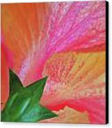 Hibiscus Canvas Print by Kathy Yates