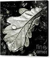 Leaf Canvas Print by Odon Czintos