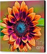 Orange Flowers In Their Buttonholes Canvas Print by Gwyn Newcombe