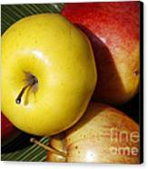 An Apple A Day Canvas Print by Denise Pohl