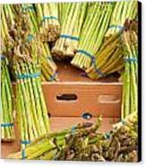 Asparagus Canvas Print by Tom Gowanlock