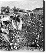 Cotton Industry, Early 20th Century Canvas Print by
