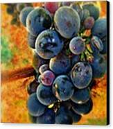 Fall Harvest Canvas Print by Kevin Moore