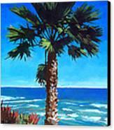 Fan Palm - Diamond Head Canvas Print by Douglas Simonson