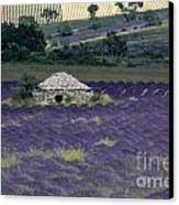 Field Of Lavender. Sault Canvas Print by Bernard Jaubert