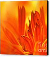 Fire Storm  Canvas Print by Elaine Manley