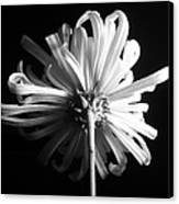 Flower Canvas Print by Sumit Mehndiratta