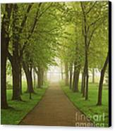 Foggy Park Canvas Print by Elena Elisseeva