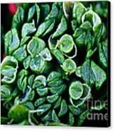 Fresh Chives Canvas Print by Susan Herber
