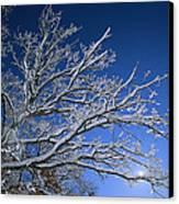Fresh Snowfall Blankets Tree Branches Canvas Print by Tim Laman