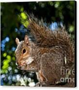 Gray Squirrel Canvas Print by Fabrizio Troiani