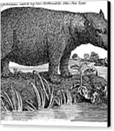 Hippopotamus Canvas Print by Granger