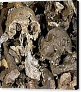 Hominid Skull Casts Canvas Print by Volker Steger