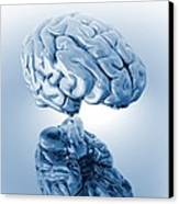 Human Brain, Artwork Canvas Print by Victor Habbick Visions