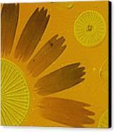 Microscopic Arrangement Canvas Print by Darlyne A. Murawski