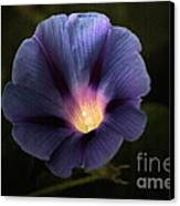 Morning Glory  Canvas Print by Marjorie Imbeau