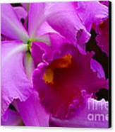 Orchid 5 Canvas Print by Julie Palencia