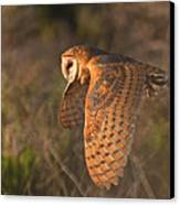 Silent Hunter Canvas Print by Beth Sargent