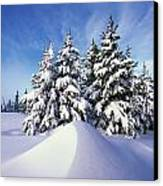 Snow-covered Pine Trees Canvas Print by Natural Selection Craig Tuttle