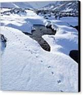 Snowy Landscape, Scotland Canvas Print by Duncan Shaw